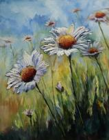 Daisies in the veld - AVAILABLE