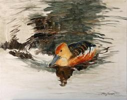 Duck on Pond 3 - AVAILABLE